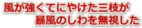 logosanshi